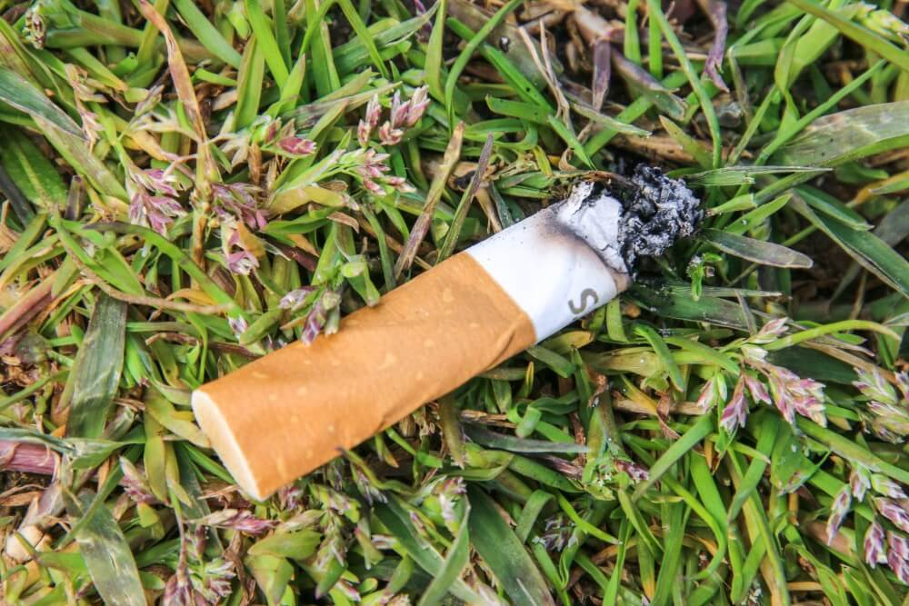Glühende Zigaretten bergen in der Natur eine hohe Brandgefahr
