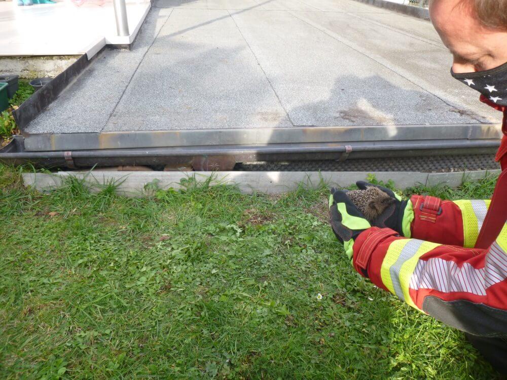 Ein Igel benötigte am 20. Oktober 2020 dringend die Hilfe der Würzburger Feuerwehr.