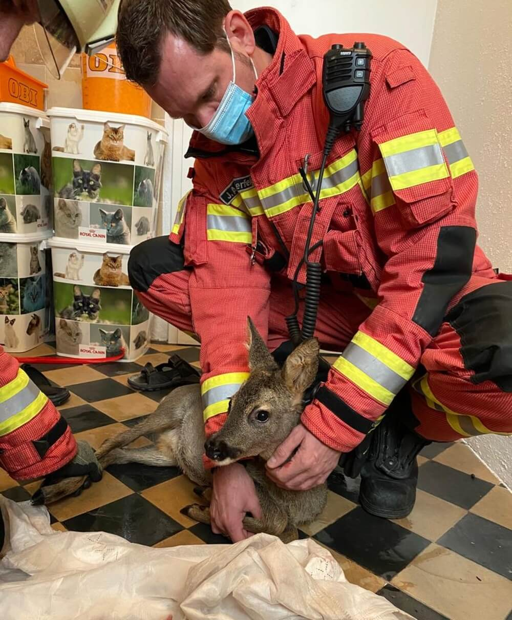 Ein Waldbewohner auf Abwegen benötigte am Vormittag des 17. Oktober 2020 die Hilfe der Velberter Feuerwehr.