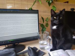 Erfolgreich im Home Office trotz Katze