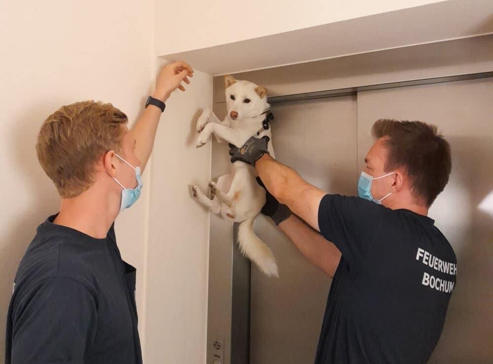 Ein Hund hatte am Nachmittag des 6. September 2021 seinen Fahrstuhl verpasst. Dieser fuhr ohne ihn los, doch aufgrund seiner Besitzerin fuhr der Hund bis zur Türoberkante im Kellergeschoss mit.